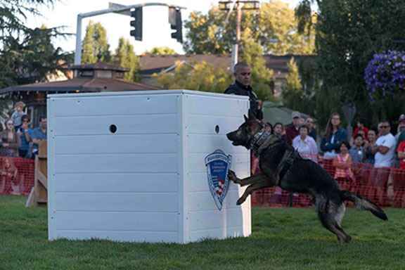 BPD K9 officer demonstrates search capabilities at National Night Out event.