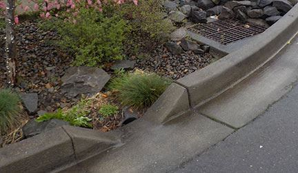 Newly prepared curb with plants, stones and drainage grate with no painted numbers.